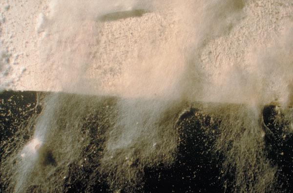 moisissure blanche finest agrandir cette imagerduire cette image cliquez ici pour la voir sa. Black Bedroom Furniture Sets. Home Design Ideas